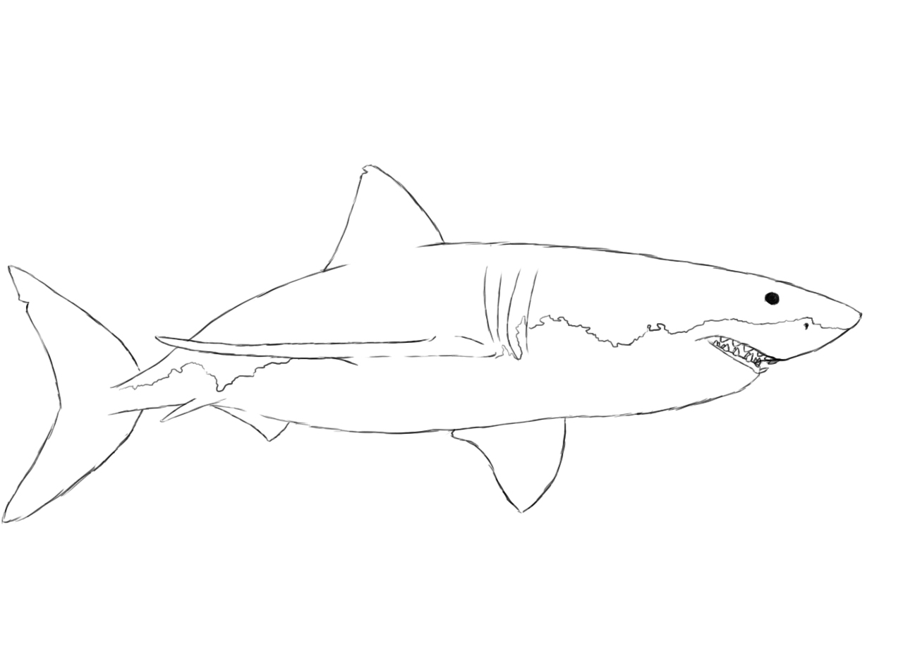 Uncategorized How To Draw A Sharks how to draw a shark central all that is left do with your in the smaller details like teeth mouth and few slits for gills near front fins
