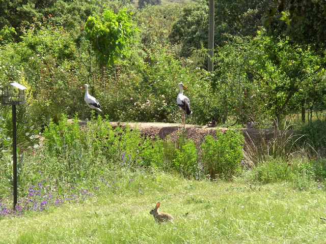 """""""Día Europeo de los Parques"""" en el Centro de Educación Ambiental Casa de Campo"""