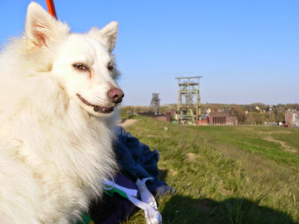 Zeche Gneisenau Schaukeln Dortmund Derne Halde Frühling Hund