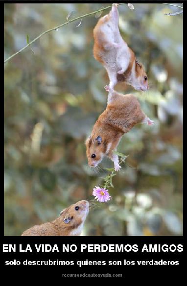 Una reflexión sobre la verdadera amistad y una imagen inspiradora.