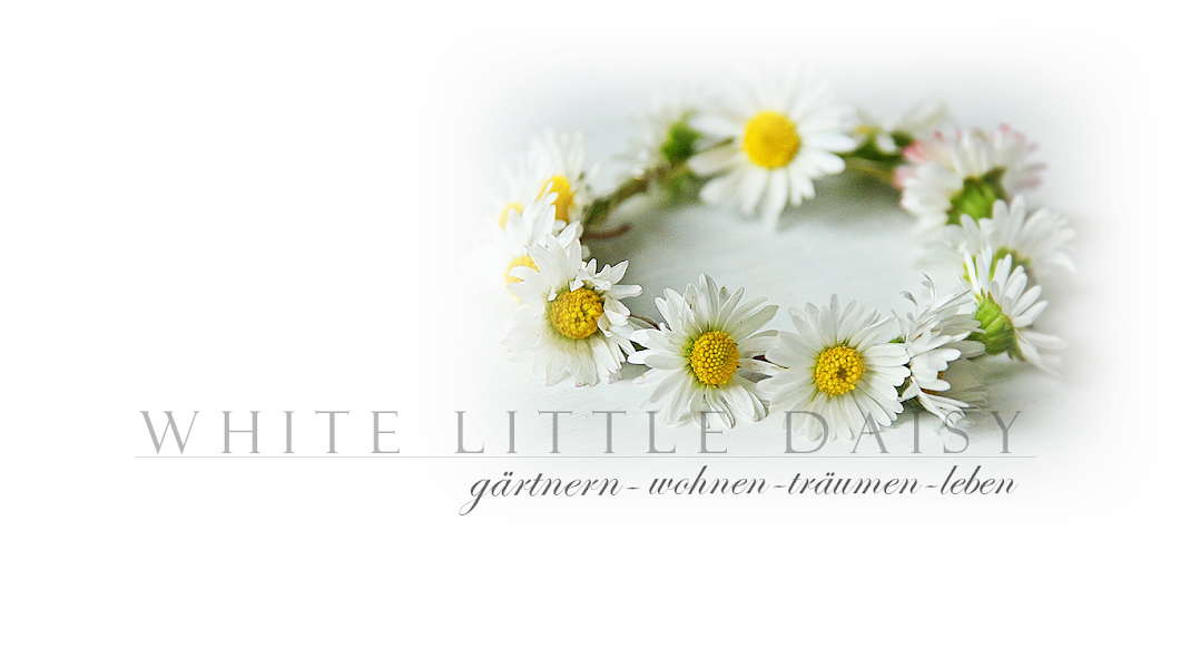 whitelittledaisy