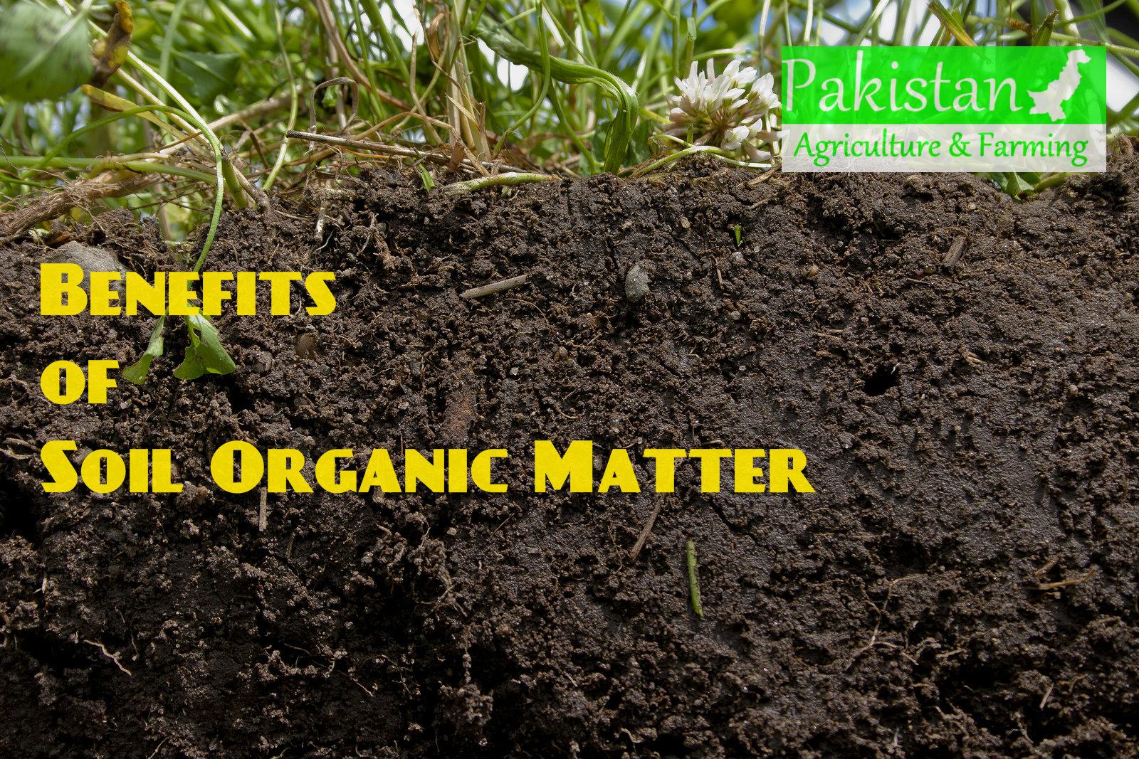 September 2013 pakagrifarming pakagrifarming for Soil organisms