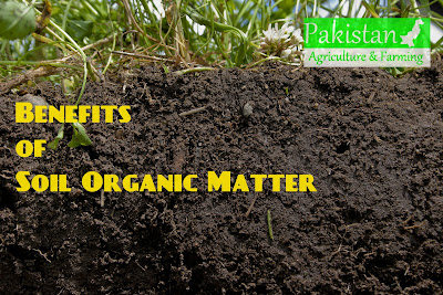 Benefits of Soil Organic Matter (Article cover)
