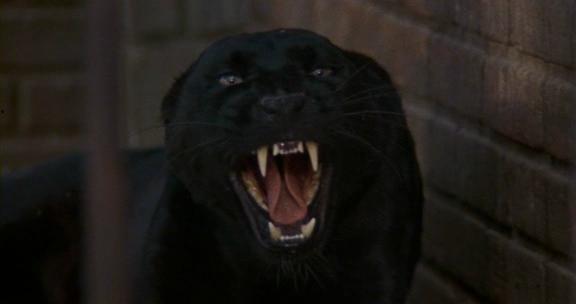 De la pantera cat people 1982 theatrical trailer online el beso de la