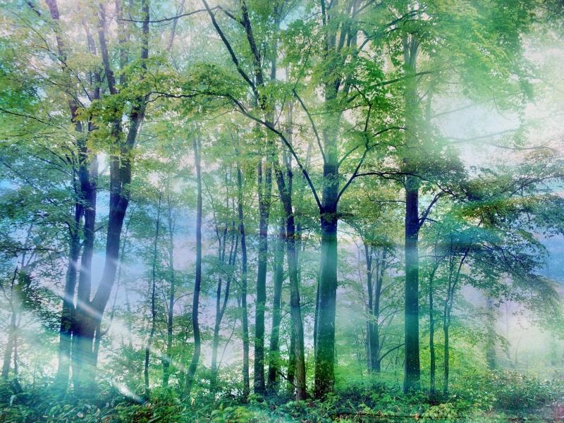 Anh+dep+Boxgiaitri 060 Hình nền máy tính: Chủ đề Ảnh đẹp thiên nhiên