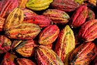 Cosses de cacao - Crédit : Didier Gentilhomme