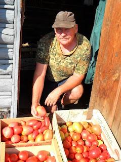 Рассаду помидоров сею в начале апреля