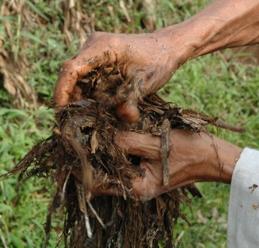 bdo how to make organic fertilizer