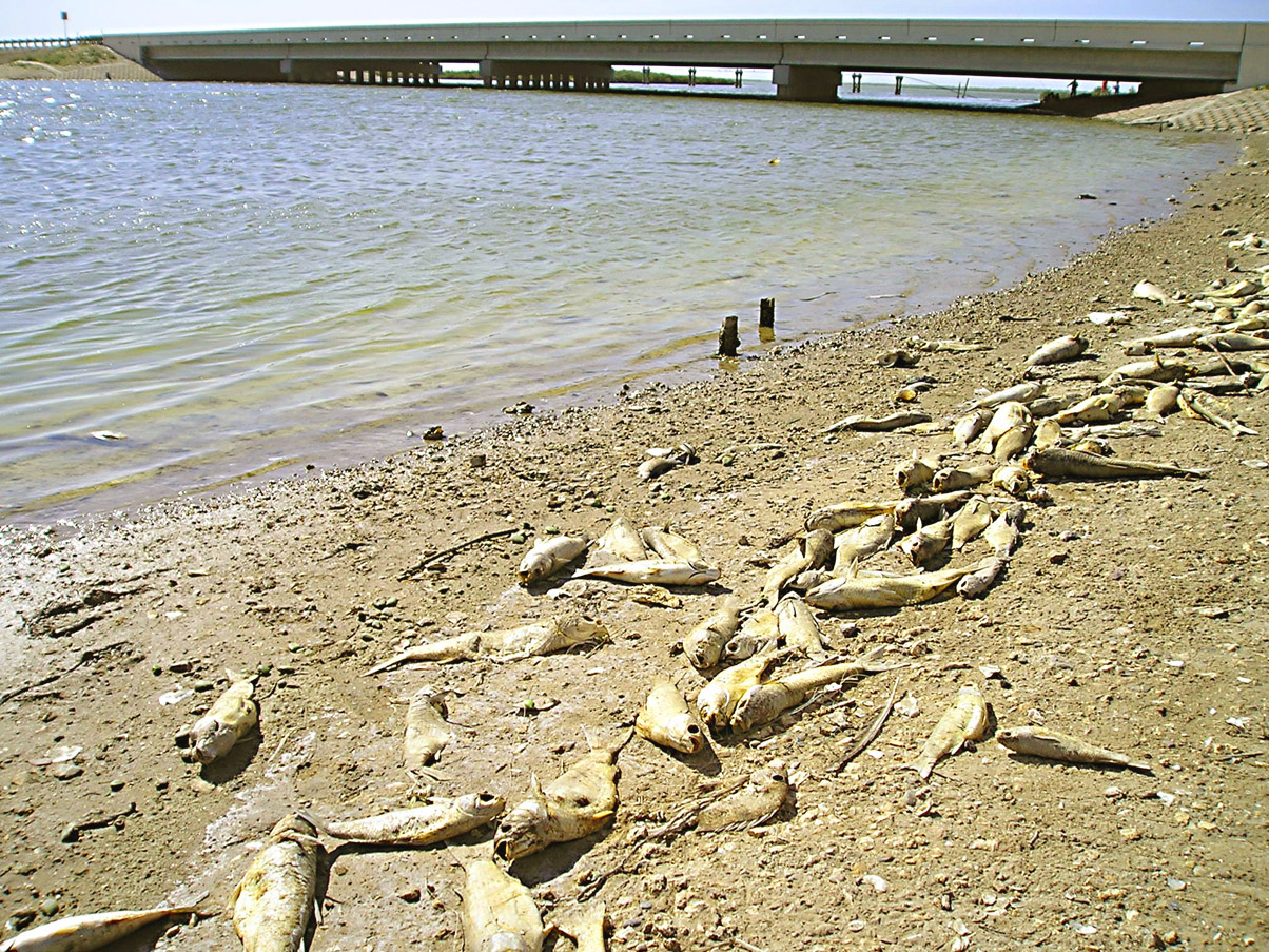El rrun rrun red tide kills fishing action in san martin lake for Tides for fishing san diego