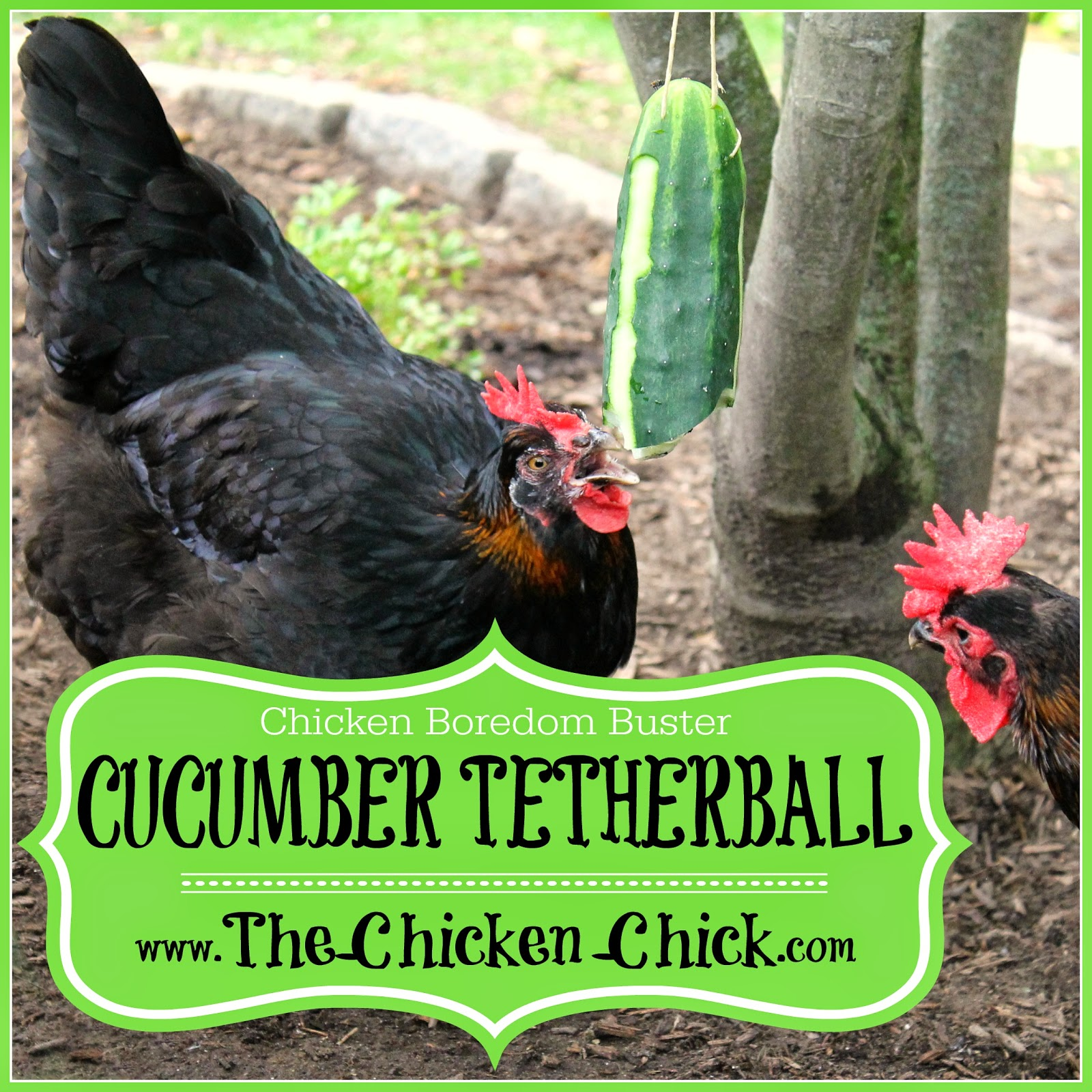Cucumber tetherball & Squash Tetherball for Chickens