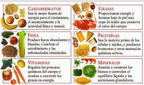 Qué cosas nos proporcionan los alimentos de origen animal y ...