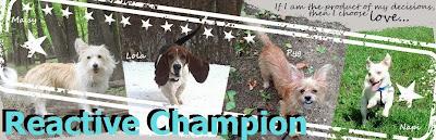 Reactive Champion