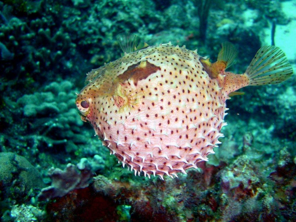 peces extraños