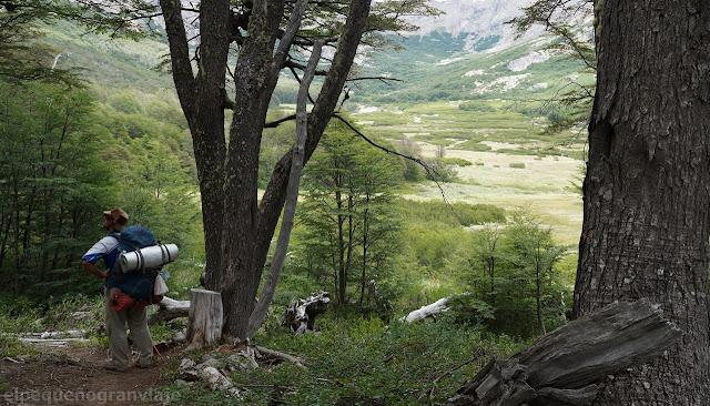 bosque, rio, rucaco, bariloche