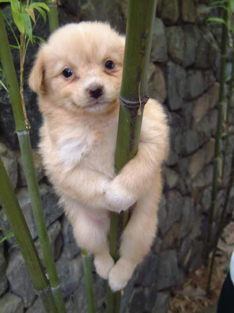 Cute puppy hanging from a bamboo