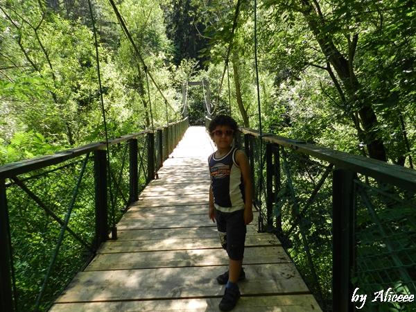 poduri-in-cheile-turzii