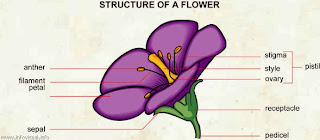 structure of a flower