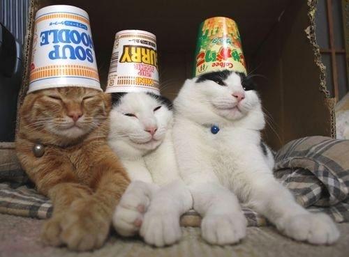kucing+lucu