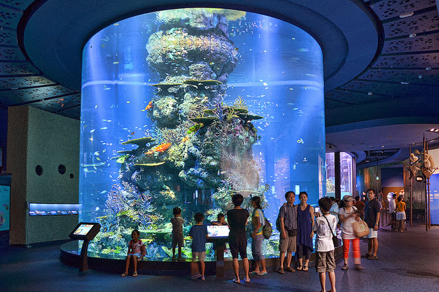 Resort+World+Sentosa+SEA+aquarium+circular+fish+tank
