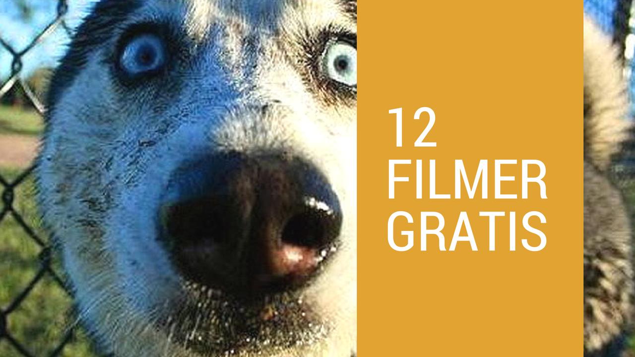 12 filmer til valpeeiere