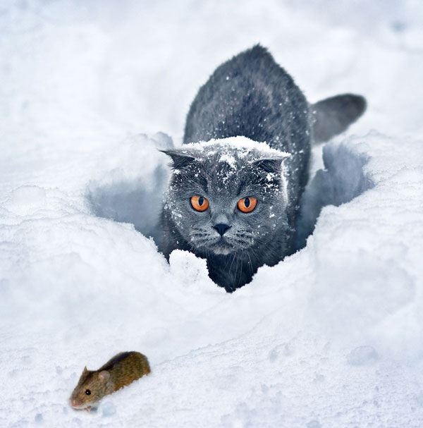 wild cat hunting the animal
