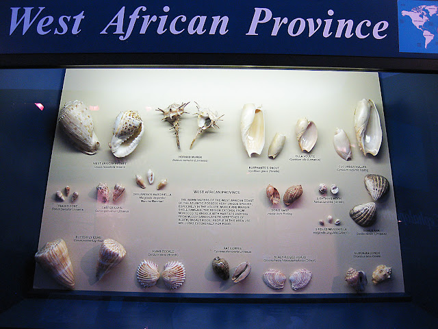 Shells From West Africa