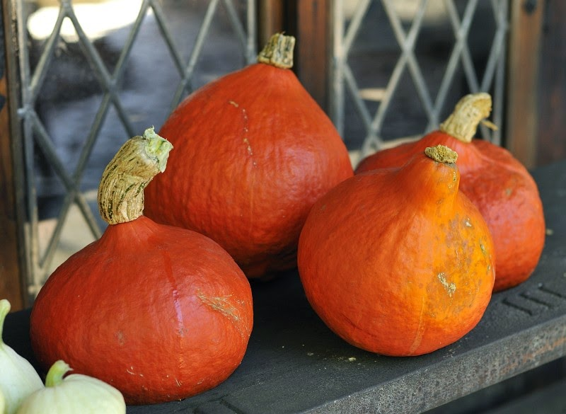 Tekvica - úžasný jesenný dar prírody / Pumpkin