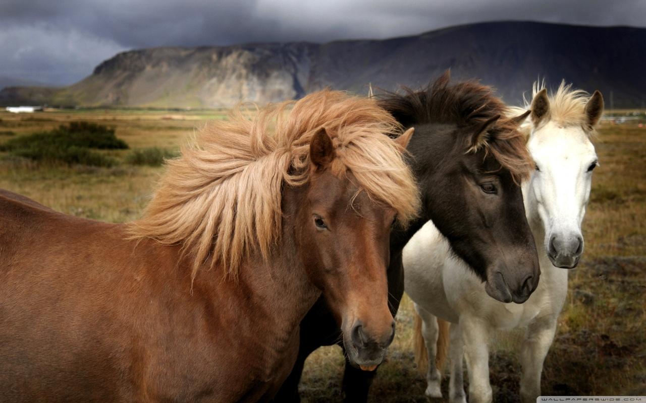 http://4.bp.blogspot.com/-hMCvWPD3Kew/TxpZfaKWpoI/AAAAAAAAE-Q/pMdqmH5j7k0/s1600/horses_5-wallpaper-1280x800.jpg