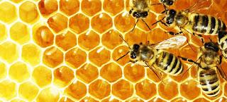 produk-peternakan-madu-lebah