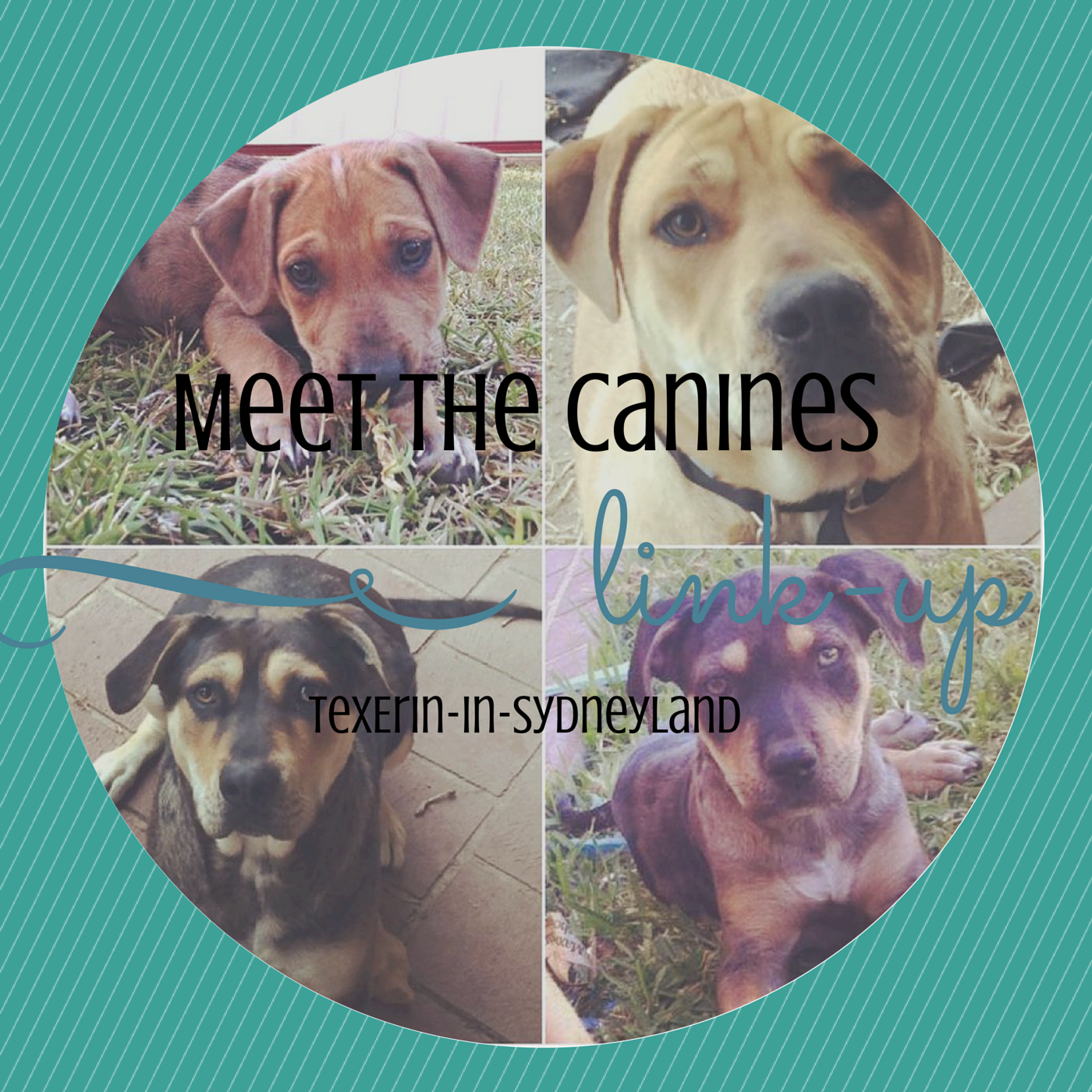 http://texerin-in-sydneyland.blogspot.com.au/2015/04/meet-canines-link-up.html