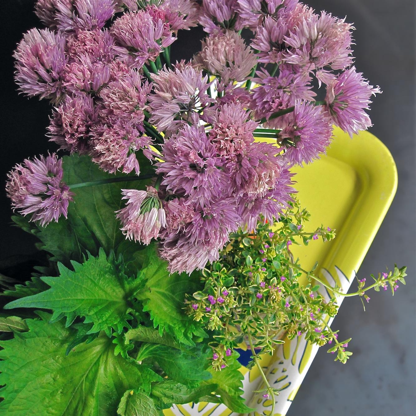 "Scarf Boys: ""Purple Herb Flowers""1333 x 1333 jpeg 668kB"