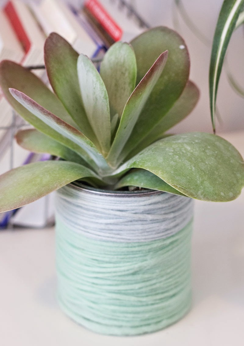 yarn wrapped plant can