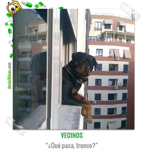 Chiste de Animales acerca de un Rottweiler asomado a la ventana