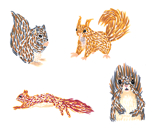 Squirrel Sketches - Jen Haugan Animation & Illustration