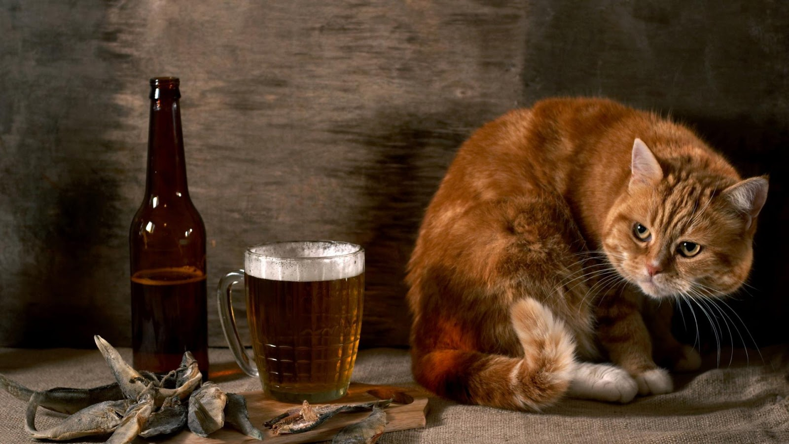 Cat Looking to Beer Funny Wallpapers for Facebook