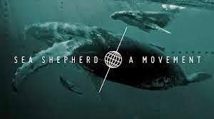SEA SHEPHERD MOVEMENT