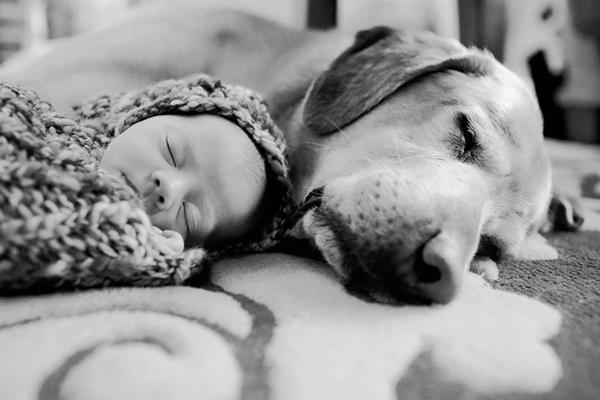 Chú cún và bé yêu đang ngủ