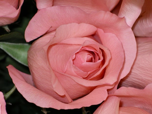 como combinar el color rosa palo tania coup de coeur On color palo de rosa