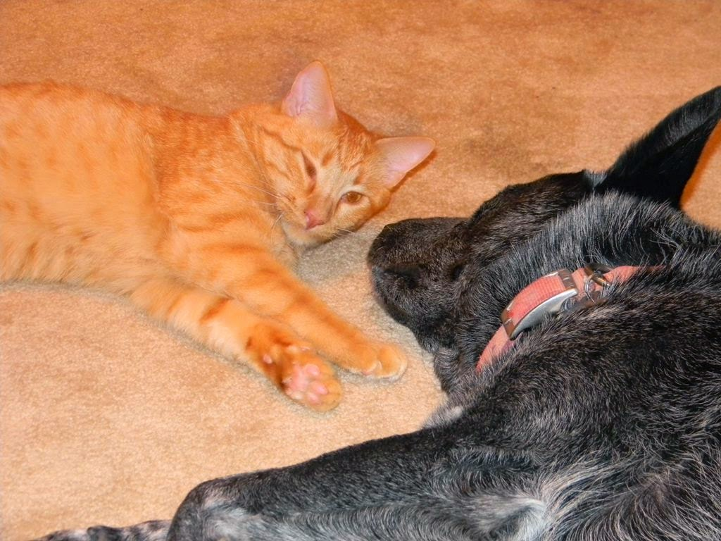 Smitty kitty & Pepper doggy