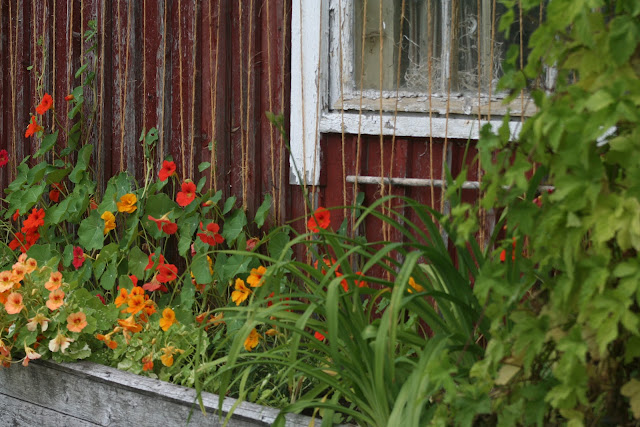 Flowers on the barn.