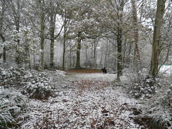 The first snow arrived in Surrey