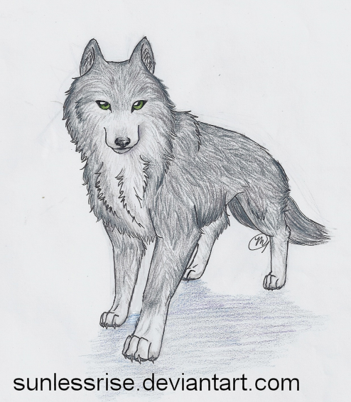 Simple Gray Wolf Drawing