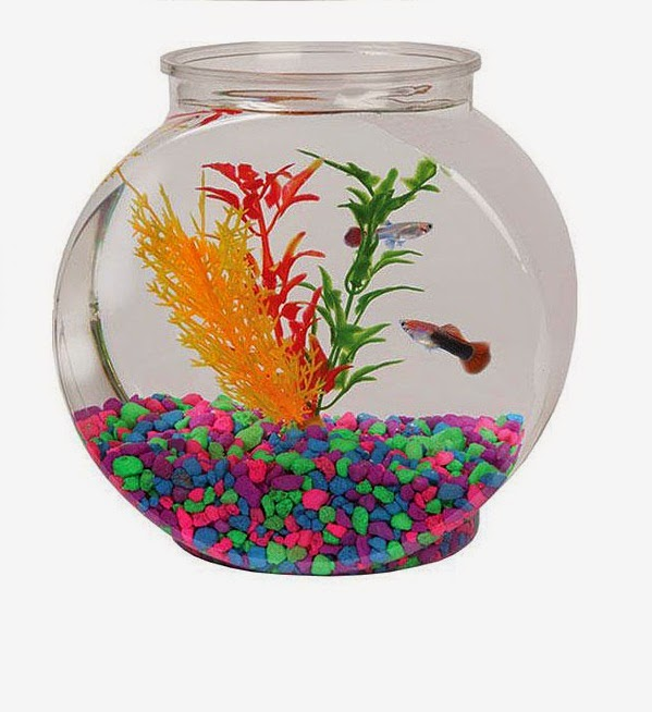 Cool fish tanks decorations