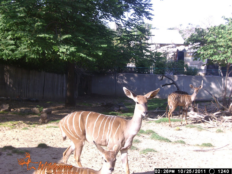 Daily Zoo Camera Trap Images