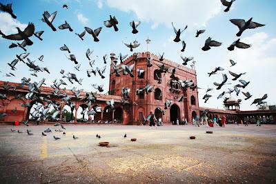Revoada de pombos