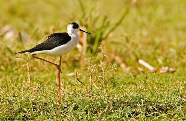 Eco-Sensitive Zone Okhla Bird Sanctuary