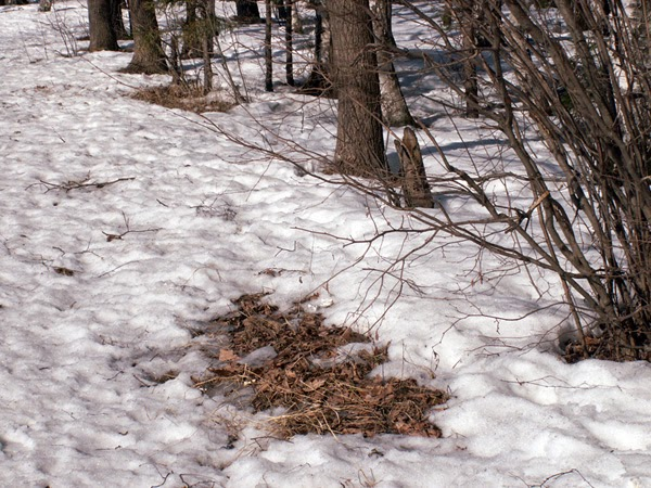 Из под снега показалась трава