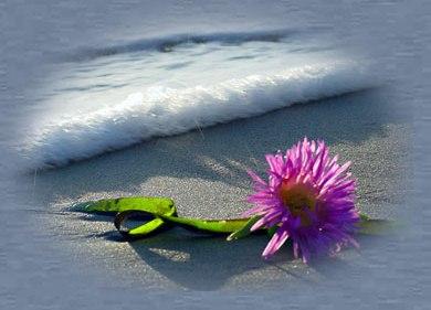 http://4.bp.blogspot.com/-hOyscJ_hIBo/URf4pSfGcwI/AAAAAAAAB6k/_yjSmzSDLu0/s1600/Aloha_flower.jpg
