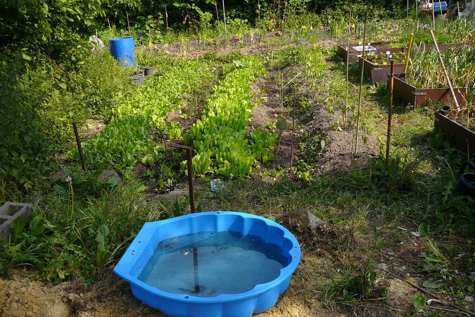 Les jardins du laveu un pas de plus vers la biodiversit for Au jardin de la nymphe bleue