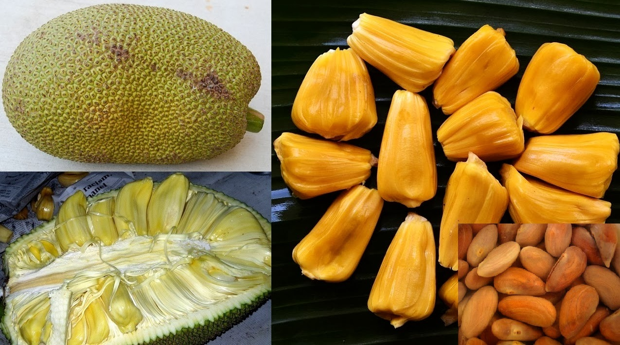 Jackfruit Farming Business